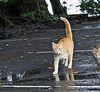 街貓攝影:美 與 人文感 兼具