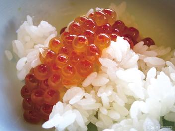 不吃不可。北海道海鮮丼