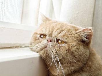 深邃凝視的眼神,30張不同神情的 貓咪 看窗外 攝影作品