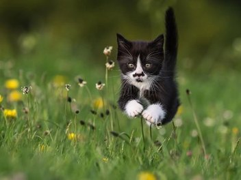 漂浮少女 貓咪 版?28張凝結 貓咪 動作 的 精采瞬間