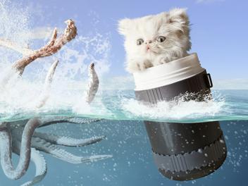 囧 囧 貓咪 Napoleon 的 奇幻 旅程 ,讓人嘴角上揚的超 可愛 寵物攝影