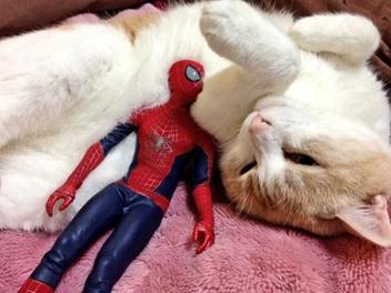 超級英雄不為人知的一面,蜘蛛人與貓咪們的宅內日常