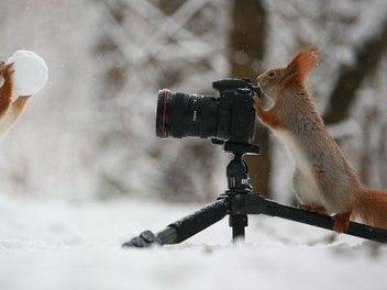 爆萌松鼠雪地玩攝影!?Vadim Trunov的冬日限定超級治癒生態攝影