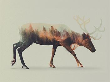詩意與靈性的美麗重曝作品,看野生動物與自然環境緊密結合