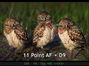 對焦模式太複雜?看影片及圖解一次搞懂 Nikon 的 AF 功能 與 應用