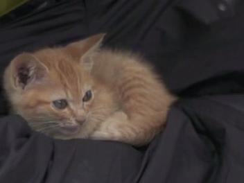 街貓攝影的小確幸?!你曾遇過這麼不怕生的街貓嗎?