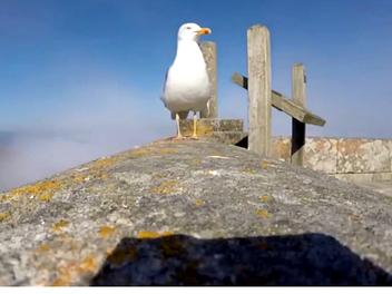 海鷗偷走了一台 GoPro,然後錄下了這段帥氣自拍影像