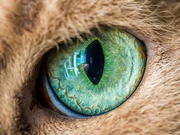 另類的微距攝影,Andrew Marttila:猫之眼