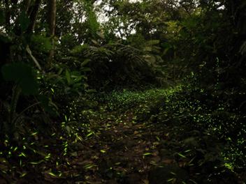 【2016 SWPA 台灣α7系列攝影比賽 低光源類別第一名】 蘇秉修:攝影,試著融入現場吧!