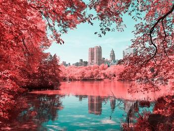 「紅外線鏡頭」讓紐約中央公園變浪漫了!