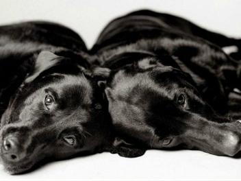 攝影師花了20年,拍攝狗狗變老的樣子