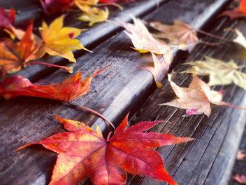 霜葉紅於二月花:秋季紅葉拍攝技巧