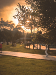 大湖公園-陽光